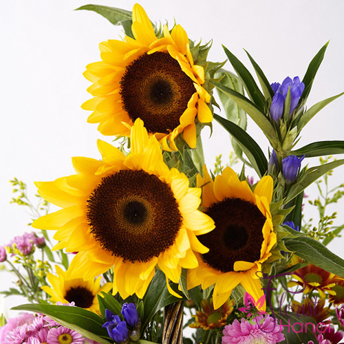 Sunflower for birthday in Hanoi free delivery